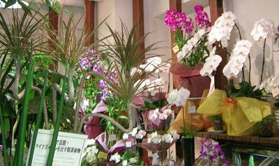 花 花屋 花束 アレンジメント カサブランカ