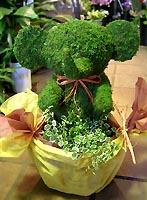 モスのぞうさん 観葉植物付 お勧め品