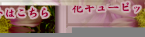 花束プレゼント フラワーギフト アレンジメント 名古屋市 瑞穂区 花せんじゅえん 花キューピットはこちら